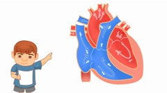 Heart Anatomy  - Vector Cartoon - White Background - boy Stock Footage