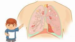 Lungs Anatomy  - Vector Cartoon - White Background - boy - stock footage