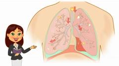 Lungs Anatomy  - Vector Cartoon - White Background - teacher - stock footage