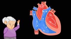 Heart Anatomy  - Vector Cartoon - Black Background - grandma - stock footage