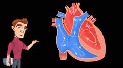 Heart Anatomy  - Vector Cartoon - Black Background - student - stock footage