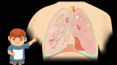 Lungs Anatomy  - Vector Cartoon - Black Background - boy - stock footage