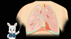 Lungs Anatomy  - Vector Cartoon - Black Background - rabbit - stock footage