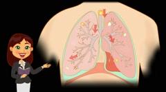 Lungs Anatomy  - Vector Cartoon - Black Background - teacher - stock footage