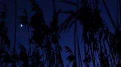 Stock Video Footage of Reed closeup. Wind. Night. Moon.