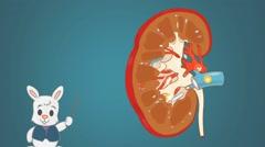 Kidney - Blue Background - rabbit Stock Footage