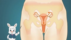 Vagina Anatomy  - Vector Cartoon - Blue Background - rabbit - stock footage