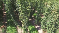 Hop field. Germany - Bavaria. Aerial shoot Stock Footage