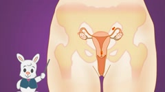 Vagina - Purple Background - rabbit Stock Footage