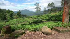 Fields of Nuwara Eliya Stock Footage