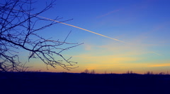 The branches of trees swaying in the sunset, the horizon. - stock footage