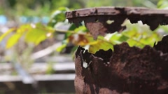 Leafy branch blowing in the wind behind jagged rusted metal (HD) Stock Footage