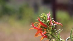 Beautiful orange flower swaying in the wind (Bokeh) Stock Footage