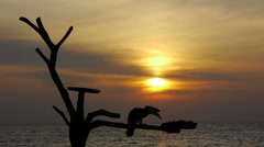 Bird eating at sunset by the sea - stock footage