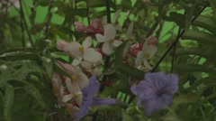 Pretty red, white and purple flowers Stock Footage