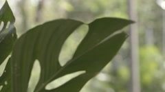 Close up rack, leaves moving in the breeze Stock Footage