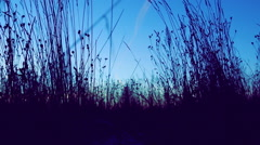 Swaying in the wind grass in a meadow. Stock Footage