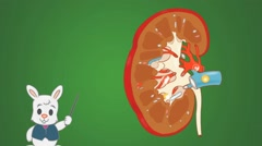 Kidney - green Background - rabbit Stock Footage