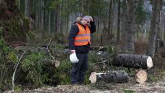 Forest inspector in destroyed forest Stock Footage