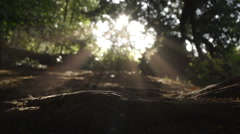 Sunrays Under An Ancient Yew Tree Stock Footage