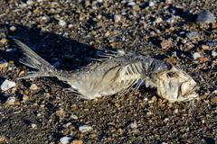Fish Skeleton on the Sand Stock Photos