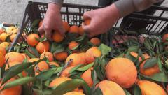 Grocery store Athens.Greengrocer arranges oranges on display. Stock Footage