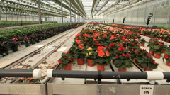 Modern Green House of Flowers - stock footage