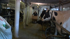 Rural Dairy Farm In Canada Stock Footage