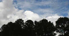 Timelapse Rolling Clouds. Weather, Blue Sky. Forest, trees Stock Footage
