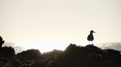 A silhouette of a seagull on a rock with the sea behind Stock Footage