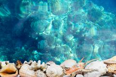 Tropical shells and blue reef - stock photo