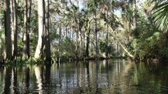 Peaceful river with trees and water Stock Footage