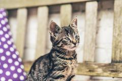 Cute alert little tabby kitten sitting in the sun - stock photo