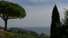 Amazing landscape of the sea and a mediterranean pine tree in Sainte-Maxime Stock Footage