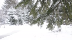 Snow falling over fir tree branch and moving due to strong wind - stock footage