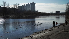 People feeding pigeons and ducks on the river bank - stock footage