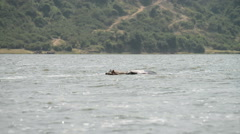 hippo in the water, Kazinga Channel, Queen Elizabeth National Park, Uganda, Afri - stock footage