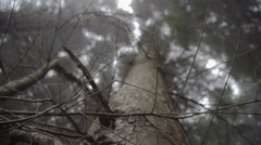 Stock Video Footage of Looking Up In A Dark Misty Forest - Eerie Style