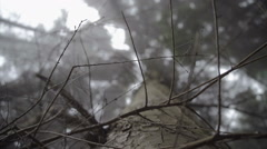 Looking Up In A Dark Misty Forest - Eerie Style - stock footage