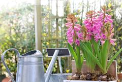 Hyacinths and gardening accesories Stock Photos