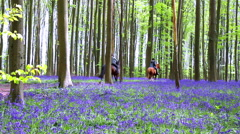 Riders in Halle Forest. Stock Footage