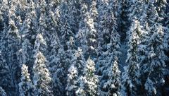 Flight Over Snowy Evergreen Trees Stock Footage
