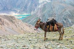 Cargo donkey in mountain area Stock Photos
