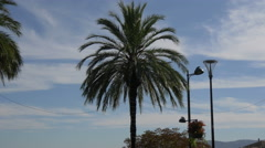 Palm tree and light posts in Grasse Stock Footage