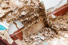 Stock Photo of Paper eaten by termite