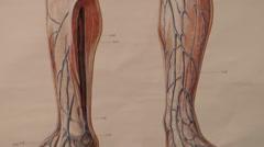 anatomic blood circulation model human - stock footage