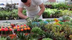 Young florist checking  growing plants - panning Stock Footage
