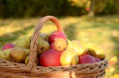 Detail on aplles in wicker basket at sunset in autumn Stock Photos