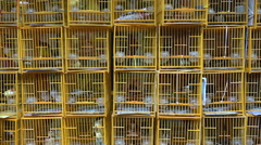 Birds held as pets for sale at a market in Hong Kong Stock Footage