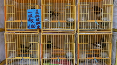 Price tag on the cages of birds at a market in Hong Kong Stock Footage